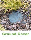 Ground Cover - click here